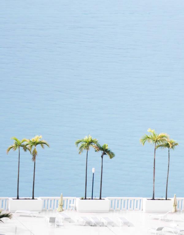 David Behar - Six Palms | blinq.art