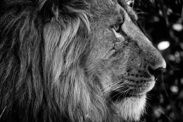 Gabi Guiard - King's Profile | blinq.art
