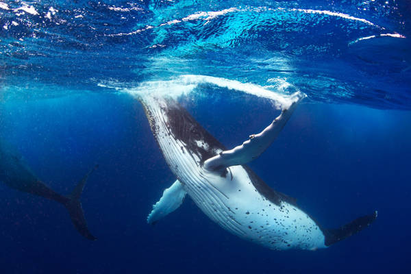 Jordan Robins - Whale of a Time | blinq.art
