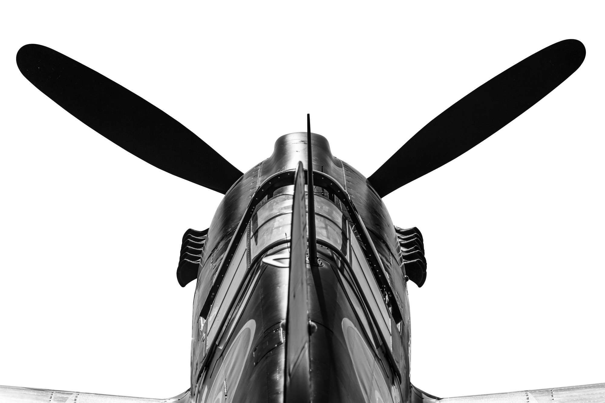 Gary Sheppard - Curtiss P-40 Kittyhawk