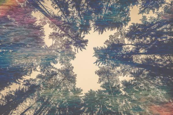 Nicolas Mithois - Sea Pines