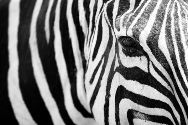 Gabi Guiard - Stripes
