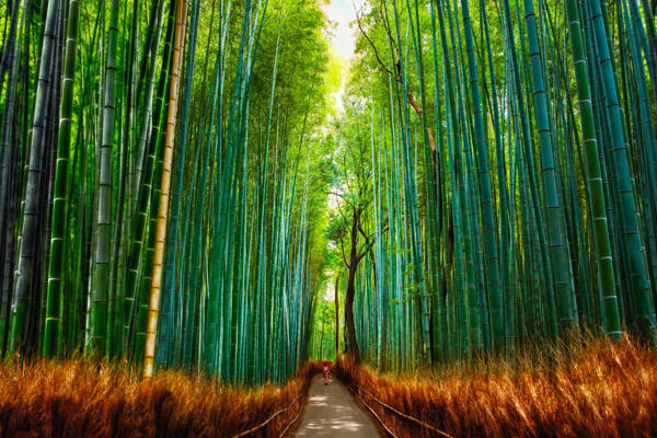 Allan Chan - Bamboo Forest