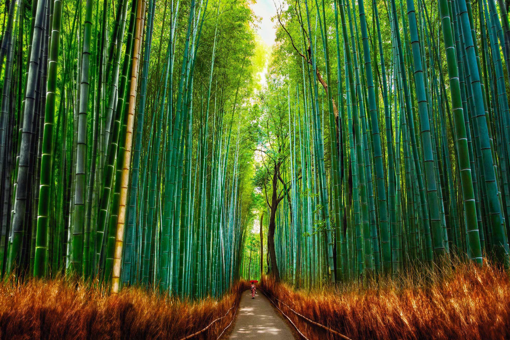 Allan Chan - Bamboo Forest