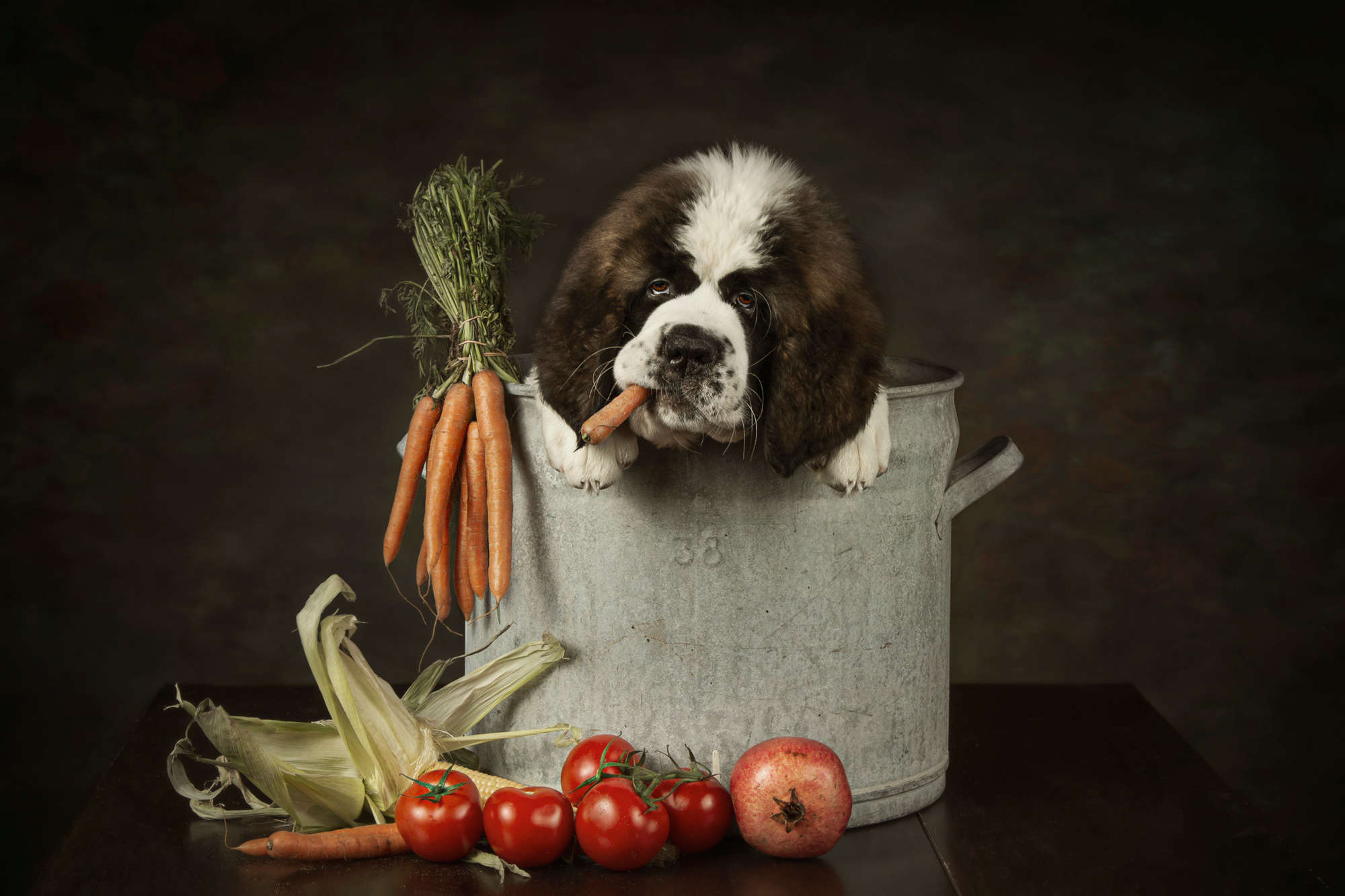 Carola Kayen-Mouthaan - Hungry Puppy