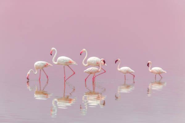 Eiji Itoyama - Serengeti Flamingos | blinq.art