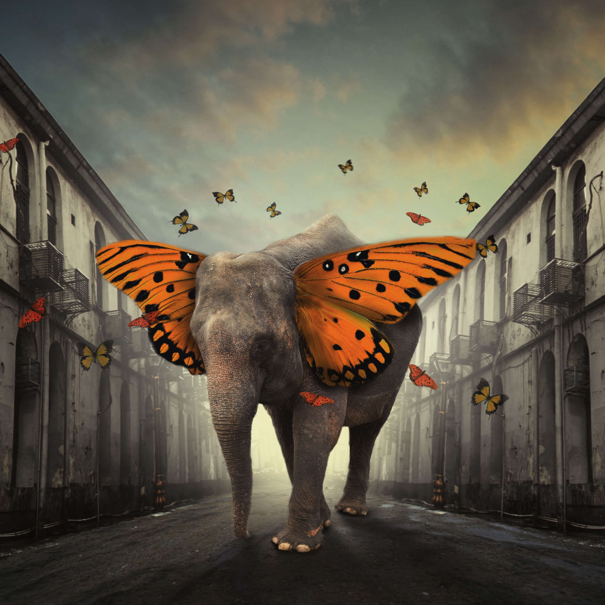 Hardibudi - Butterphant