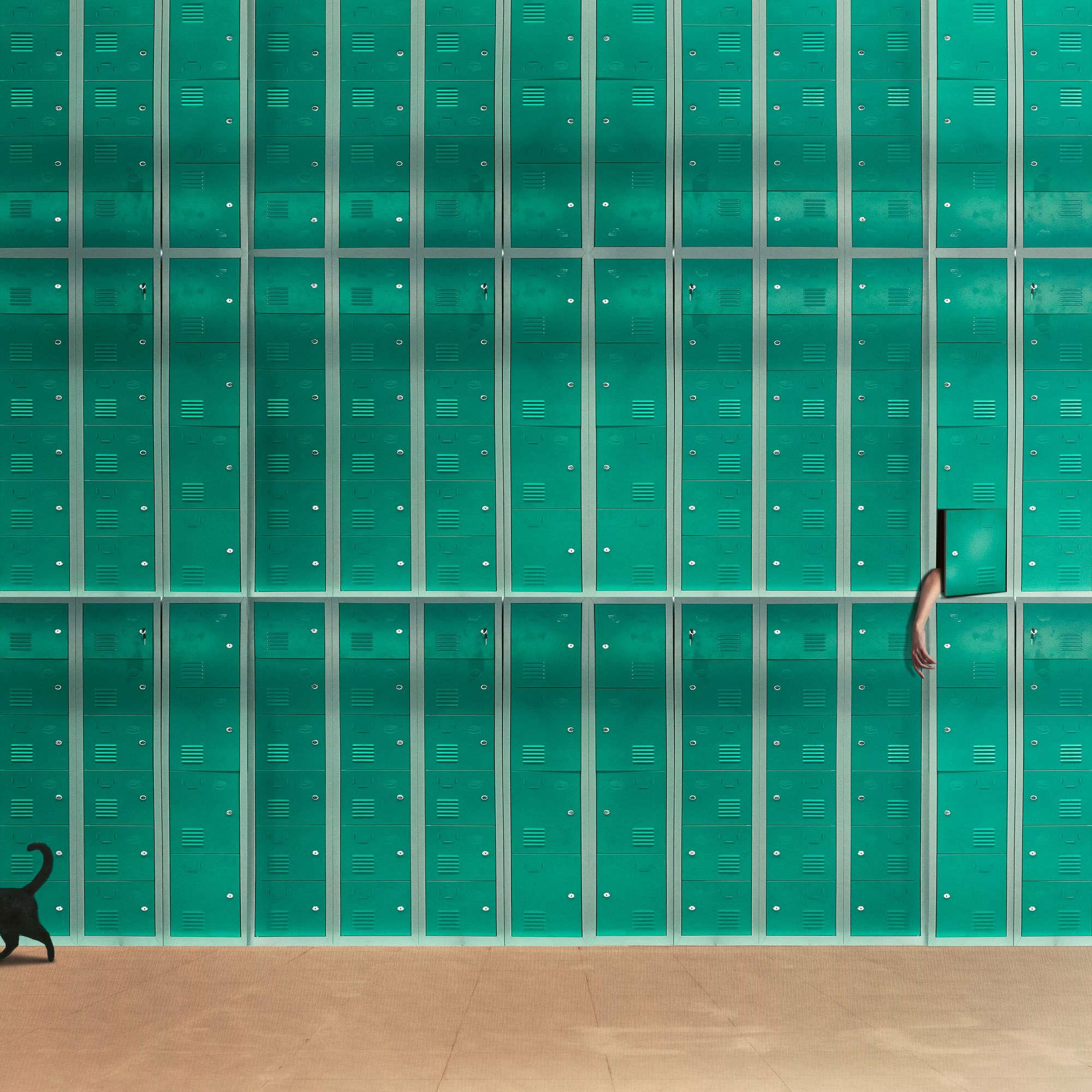 Hardibudi - Curious Cat