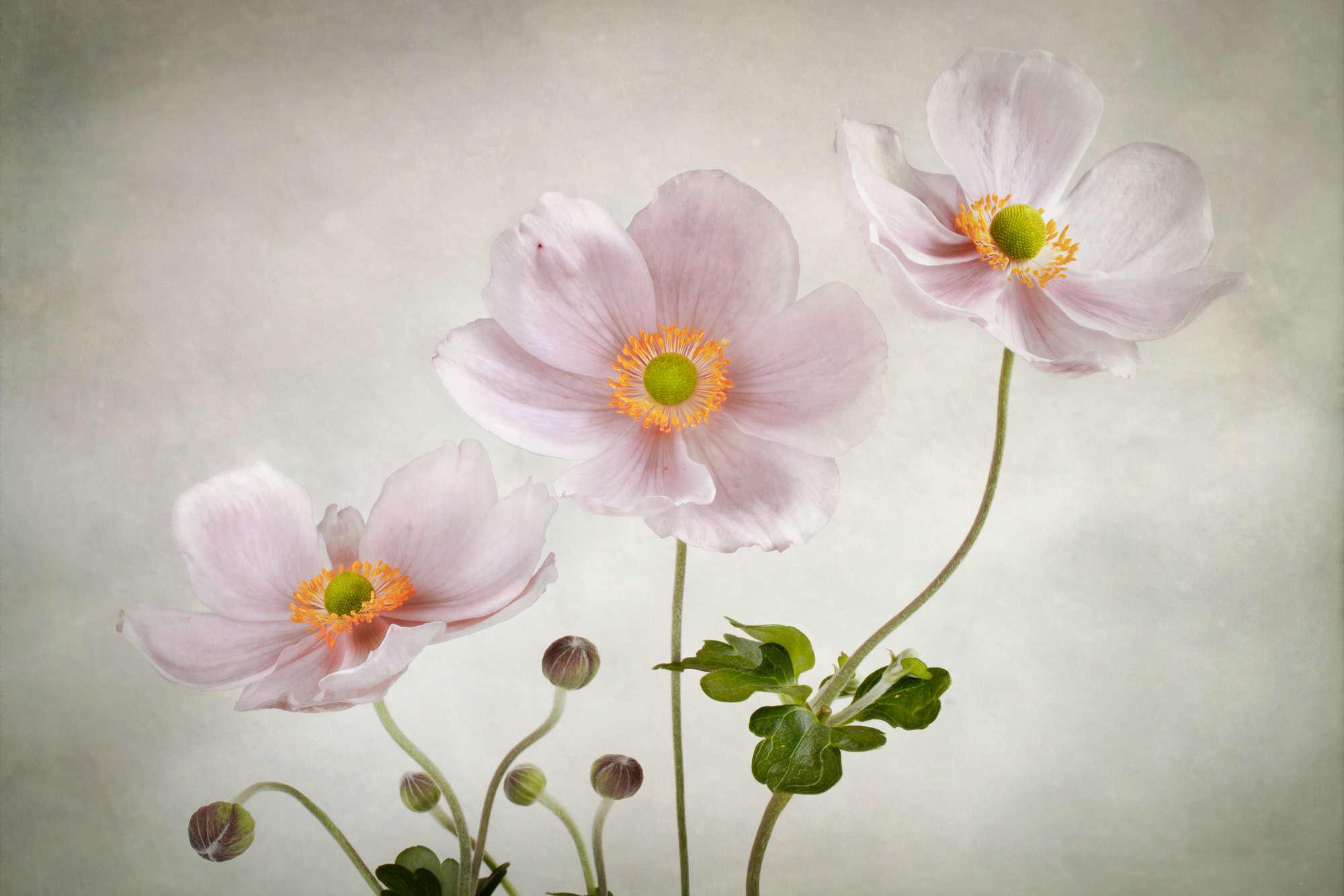 Mandy Disher - Three Anemone