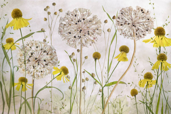 Mandy Disher - Alliums and Heleniums | blinq.art
