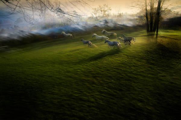 Milan Malovrh - Miracle of the White Stallions | blinq.art