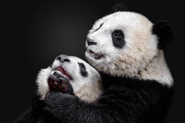 Alessandro Catta - Panda Play | blinq.art