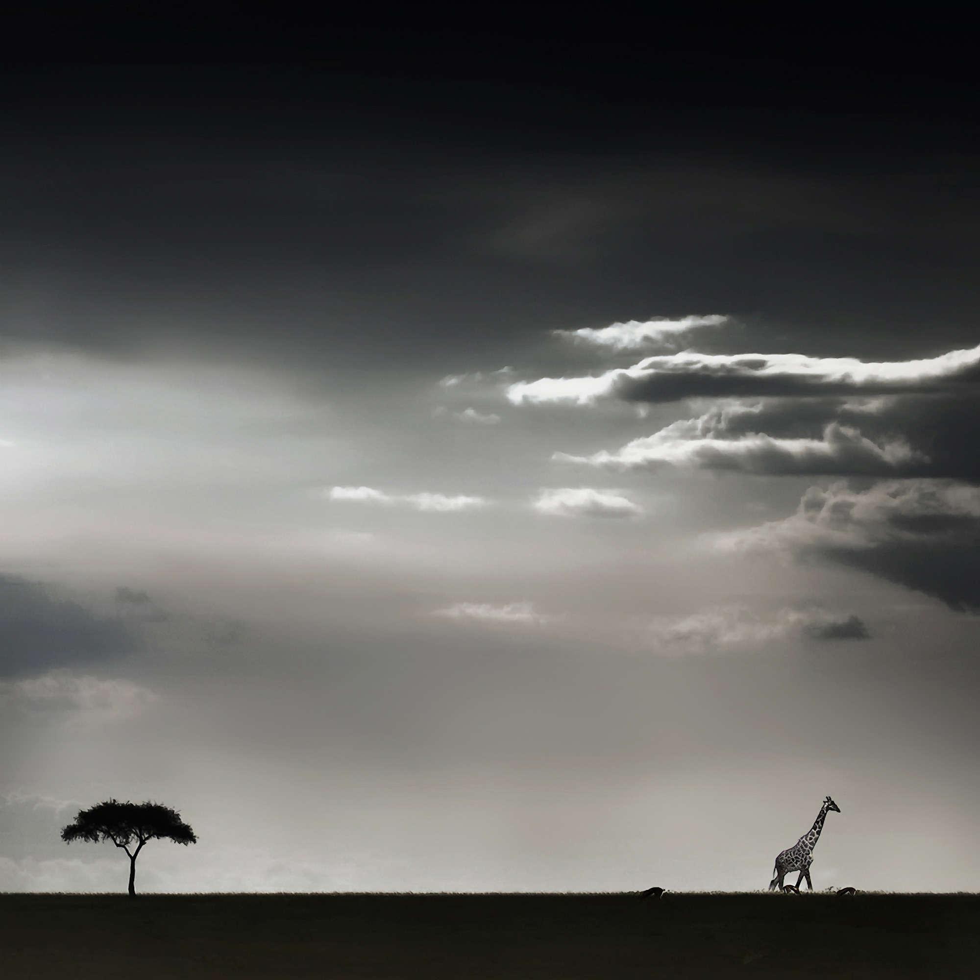 Piet Flour - Savanna Horizon