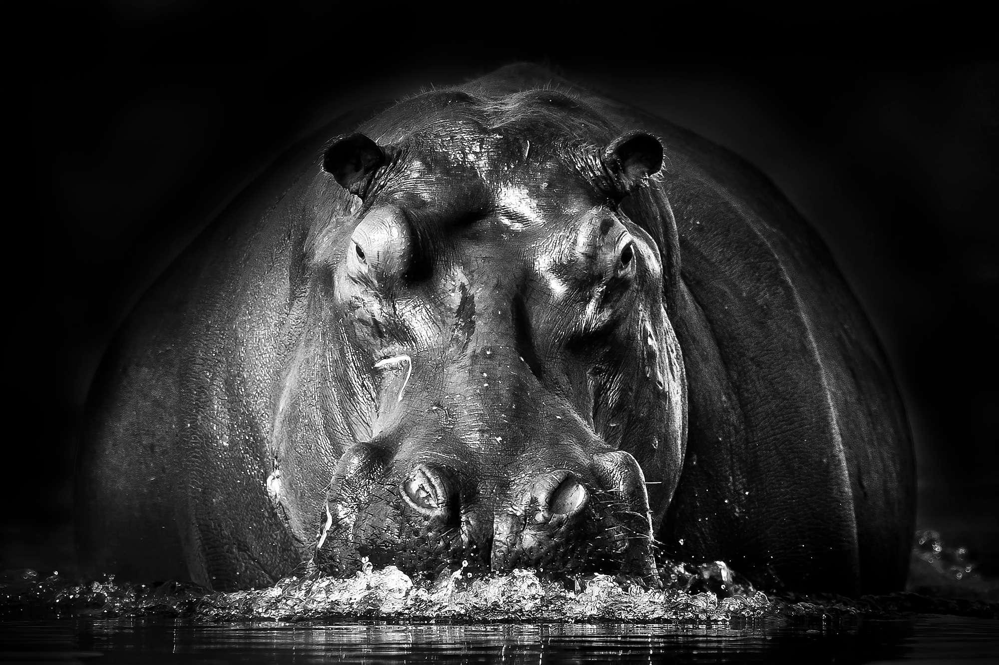 Gorazd Golob - Hippopotamus