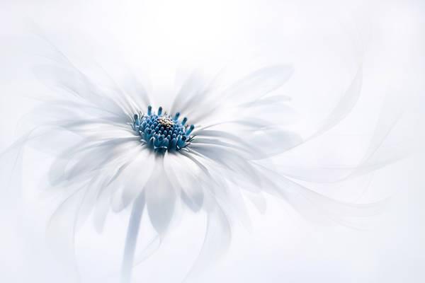 Jacky Parker - Silky White | blinq.art