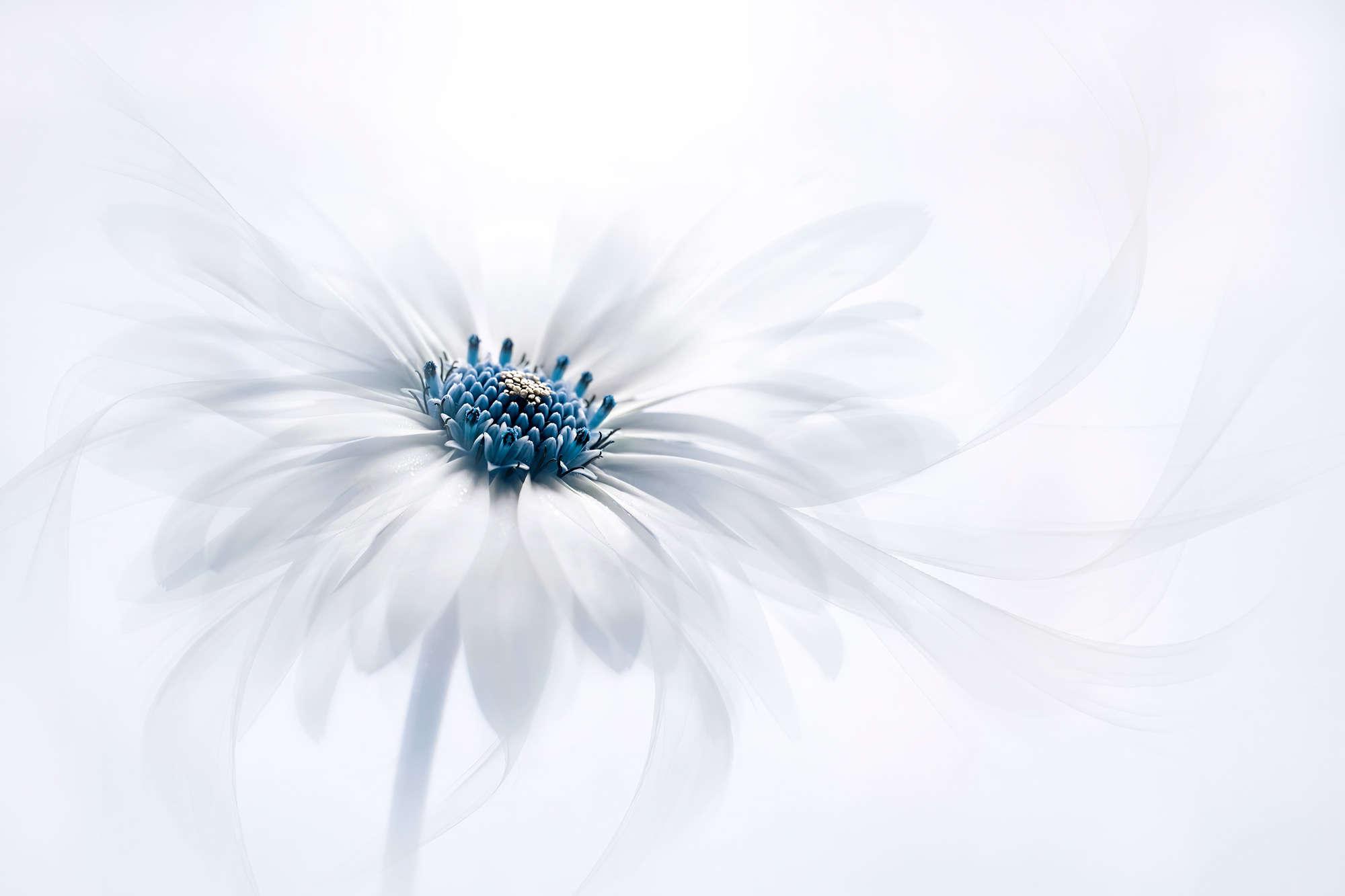 Jacky Parker - Snow Bloom