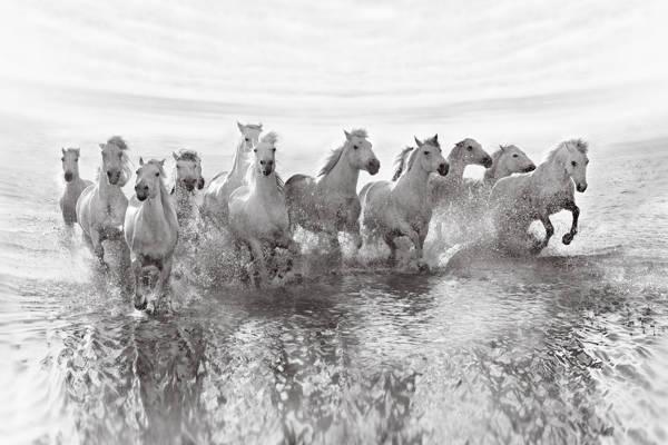 Roman Golubenko - Stallions