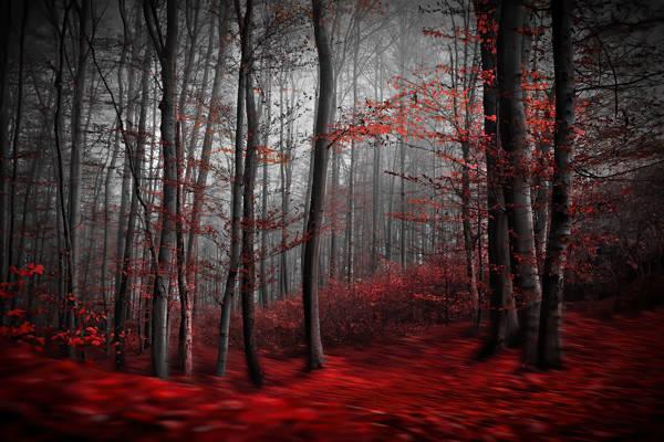 Samanta Krivec - Forest of Red | blinq.art