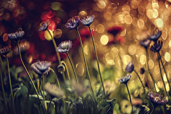 Dimitar Lazarov - Golden Garden | blinq.art
