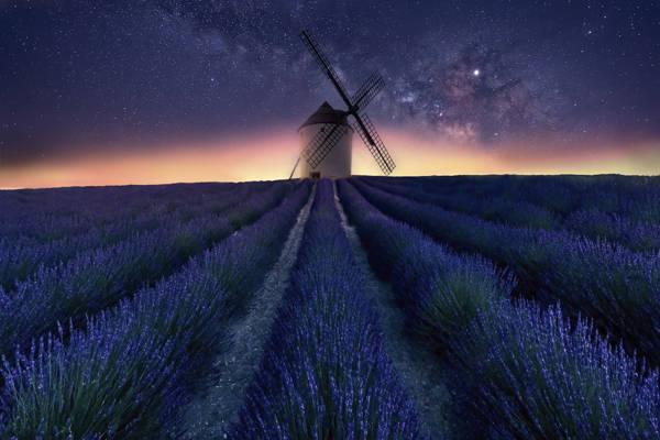 Jose Antonio Triviño Sanchez - Lavender Mill | blinq.art