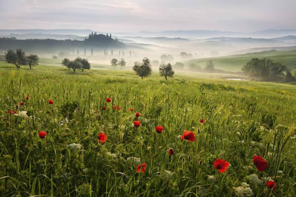 Daniel Rericha - Spring in Tuscany