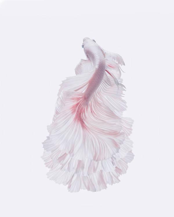 Andi Halil - Flowing | blinq.art
