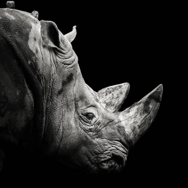 Christian Meermann - Rhinoceros