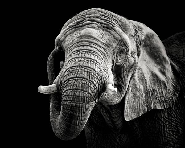 Christian Meermann - Elephant Trunk