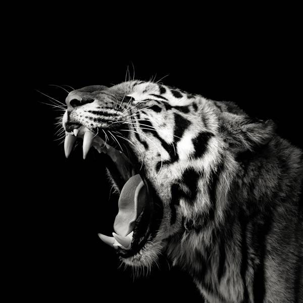 Christian Meermann - Tiger Teeth