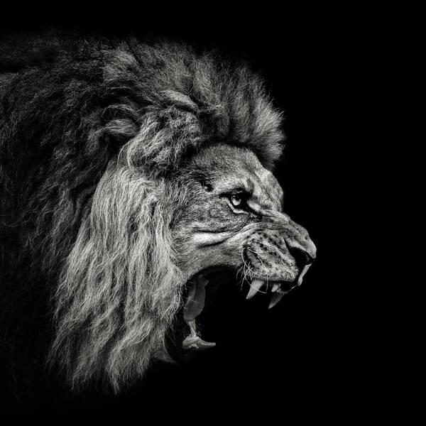 Christian Meermann - Lion Rage