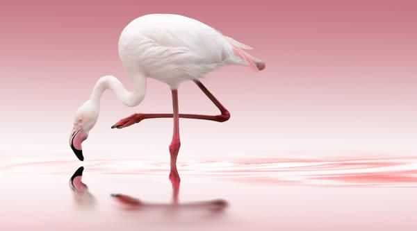 Doris Reindl - Flamingo Bow | blinq.art