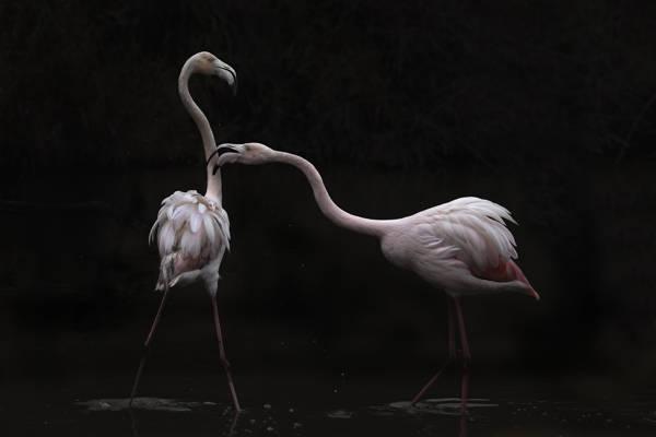 Martine Benezech - Flamingo Shallows | blinq.art