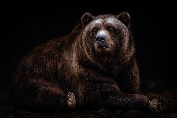 Santiago Pascual Buye - Kodiak Bear | blinq.art
